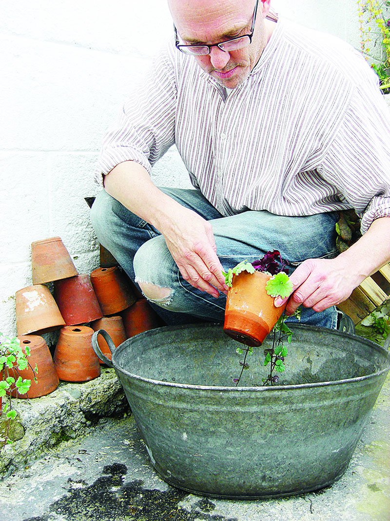 Examining one of my terracotta pots