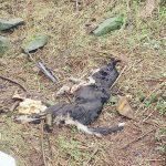 Cruel Inishowen farmer banned from keeping dogs