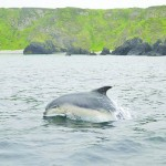 Malin Head dolphins draw the crowds